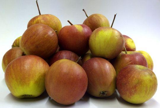 Futteräpfel 10kg