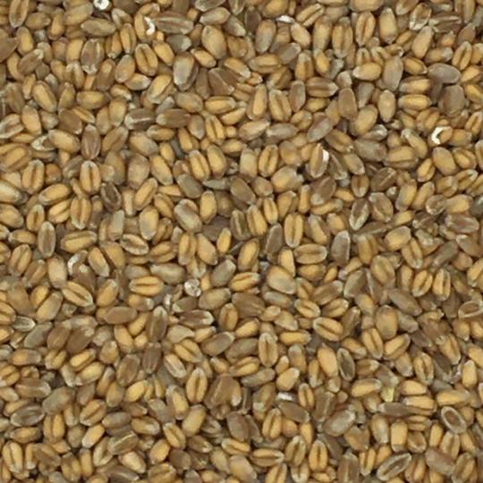 Weizen - Spinne 25kg