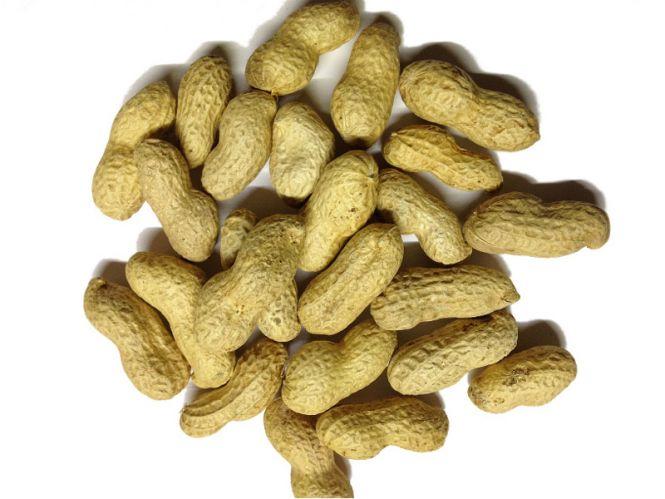 Erdnüsse mit Schale 1kg