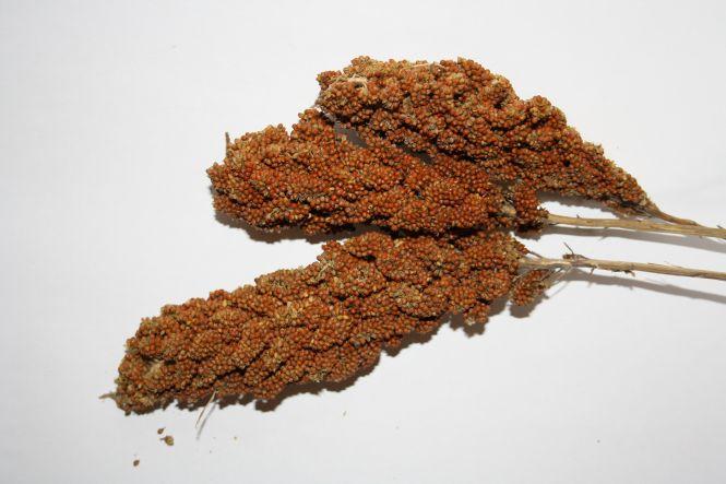 Kolbenhirse chinesisch rot - Versele 15kg
