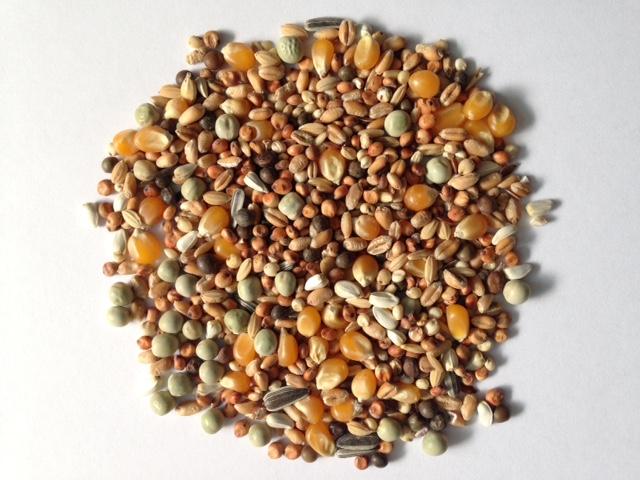 Gladen Rassetauben mit Mais, 25kg